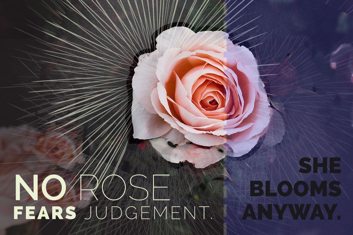 No Rose Fears Judgement